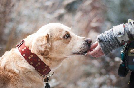 Drie makkelijk te trainen honden